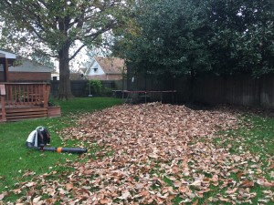 Leaf Cleanup Virginia Beach